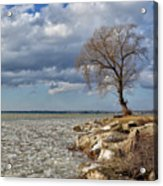 Tree By Water Acrylic Print