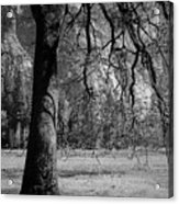 Tree Canapy  Acrylic Print