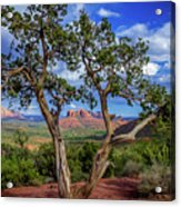 Tree Captures Sedona Acrylic Print