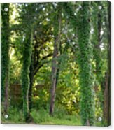 Tree Cathedral 2 Acrylic Print