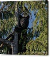 Tree Climbers Acrylic Print