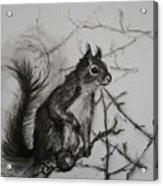 Tree Climbing Pro. Acrylic Print