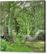 Tree Curves Two Acrylic Print
