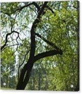 Tree Dali Acrylic Print