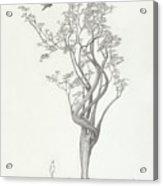 Tree Dancer In Flight Acrylic Print
