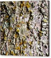 Tree Trunk Detail Acrylic Print
