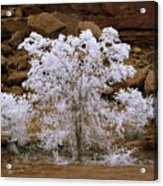 Tree During Winter Inversion Acrylic Print