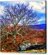 Tree Fan Acrylic Print