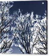 Tree Fantasy 2 Acrylic Print