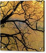 Tree Fantasy 7 Acrylic Print