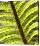Tree Fern Frond Acrylic Print