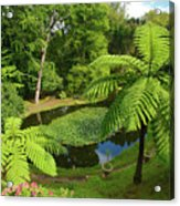 Tree Ferns Acrylic Print by Gaspar Avila
