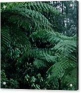 Tree Ferns Acrylic Print