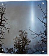 Tree Flash Acrylic Print