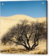 Tree Formation 3 Acrylic Print