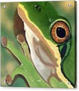 Tree Frog Eyes Acrylic Print