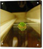 Tree Frog II Acrylic Print