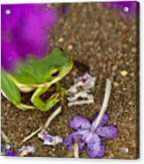 Tree Frog Under Flower Acrylic Print