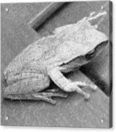 Tree Frog Up Late Acrylic Print