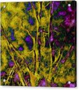 Tree Glow Acrylic Print