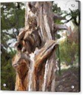 Tree Gnarl Acrylic Print