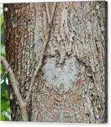 Tree Heart Acrylic Print