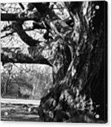 Tree I Acrylic Print