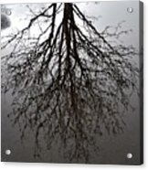 Tree In A Puddle Acrylic Print