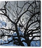Tree In Benalmadena Acrylic Print