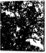 Tree In Black And White Acrylic Print