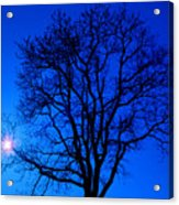 Tree In Blue Sky Acrylic Print