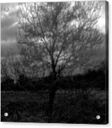 Tree In Field Acrylic Print
