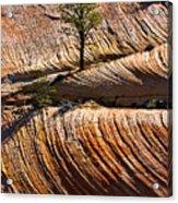 Tree In Flowing Rock Acrylic Print