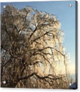 Tree In Ice Acrylic Print