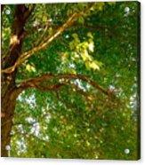 Tree In Late Summer Acrylic Print