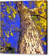 Tree In Motion Acrylic Print