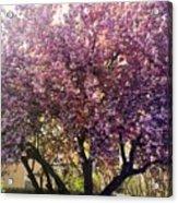 Tree In Pink Acrylic Print