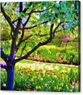 Tree In Spring Acrylic Print