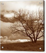 Tree In Storm Acrylic Print