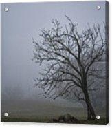 Tree In The Fog Acrylic Print
