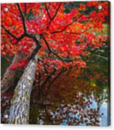 Tree In The Pond Acrylic Print