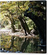 Tree In The River Acrylic Print
