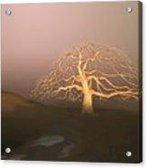 Tree In Winter I Acrylic Print