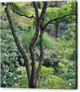 Tree Japanese Garden Acrylic Print