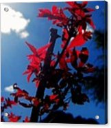 Tree Leaves Red 061814a Acrylic Print