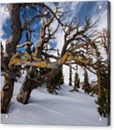 Tree Life In Winter Acrylic Print