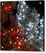 Tree Lights Acrylic Print