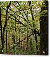 Tree Limbs Acrylic Print
