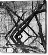 Tree Line Acrylic Print