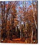 Tree Lined Path Acrylic Print